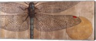 Dragonfly On Silver Fine-Art Print