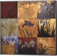 Iris Nine Patch II Fine-Art Print