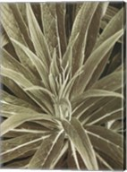 Tropica IV Fine-Art Print