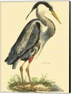 Small Great Blue Heron Fine-Art Print
