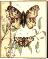 Mini Tandem Butterflies I Fine-Art Print