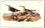Red-Backed Sandpiper Fine-Art Print
