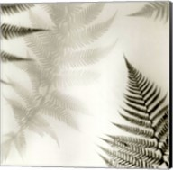 Ferns No. 2 Fine-Art Print