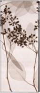 Eucalyptus II Fine-Art Print