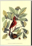 Red Bird and Hiccory Tree Fine-Art Print
