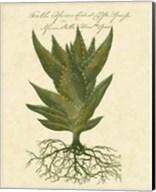 Thornton Exotics I Fine-Art Print