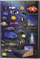 The Coral Reef Wall Poster