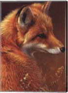 Curious Red Fox Fine-Art Print