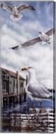 Seagull Key Fine-Art Print