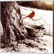 Country Cardinal Fine-Art Print