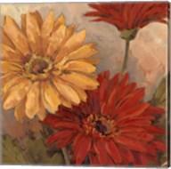 Gerber Daisies II Fine-Art Print