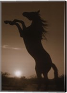 Rearing Horse Silhouette Fine-Art Print