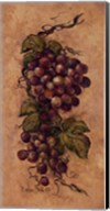 Vintage Grapevine ll Fine-Art Print