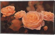 Mandarin Heirloom Roses Fine-Art Print