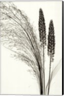 Broom Grass Fine-Art Print