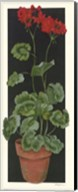 Geranium II Fine-Art Print
