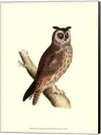 Long Eared Owl Fine-Art Print