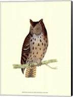 Mottled Owl Fine-Art Print
