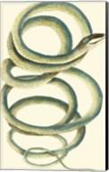 Vibrant Snake II Fine-Art Print
