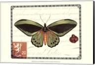 Butterfly Prose II Fine-Art Print