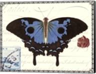 Butterfly Prose III Fine-Art Print