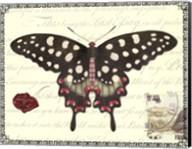 Butterfly Prose V Fine-Art Print