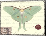 Butterfly Prose VI Fine-Art Print