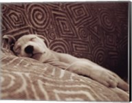 Dog Tired Fine-Art Print