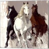Les chevaux I Fine-Art Print