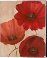 Poppy Trio II Fine-Art Print