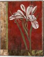 Jeweled Iris II Fine-Art Print