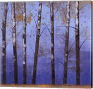 Birch Trees II Fine-Art Print