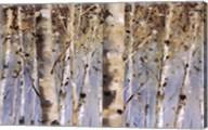 White Forest I Fine-Art Print