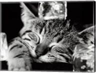 Cool Cat II Fine-Art Print