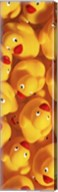 Quack Quack III Fine-Art Print