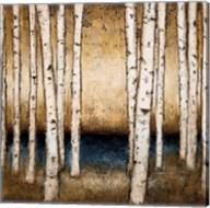 Birch Landing Fine-Art Print