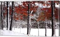 SnowFall Fine-Art Print
