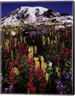 Mt. Rainier Fine-Art Print