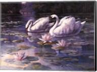 Swans and Bridge Fine-Art Print