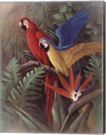 Exotic Birds Fine-Art Print