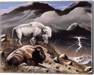 Mountain Bison Fine-Art Print