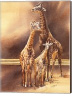 Family of Giraffes Fine-Art Print