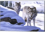 Wolves on the Prowl Fine-Art Print