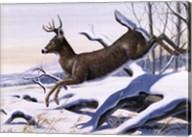 Young Buck Fine-Art Print