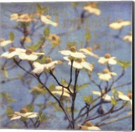 Dogwood I - mini Fine-Art Print