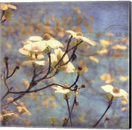 Dogwood II - mini Fine-Art Print