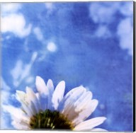 Daisies III Fine-Art Print
