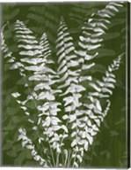 Jewel Ferns I Fine-Art Print