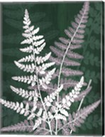 Jewel Ferns IV Fine-Art Print