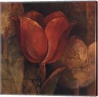 Tulip Reflection Fine-Art Print